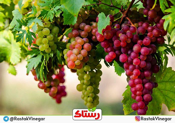 پخش سرکه اصفهان